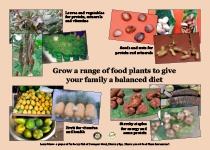 Grow a range of food plants to give your family a balanced diet