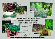Grow local plants – they suit Solomon Islands and so fail less often!
