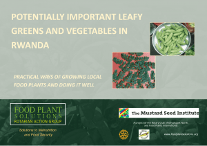 Potentially Important Leafy Greens and Vegetables of Rwanda