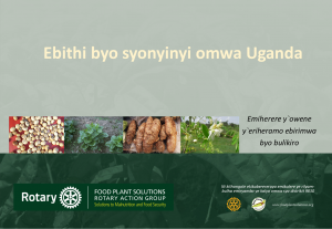 Leafy Greens and Vegetables of Rwanda - Translated Kinyarwanda